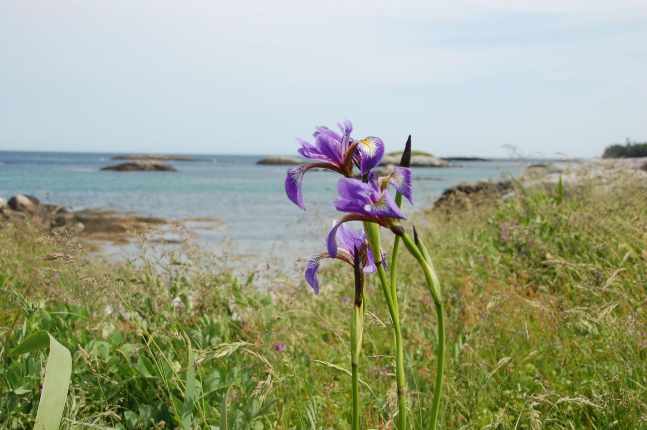 Nova Scotia26