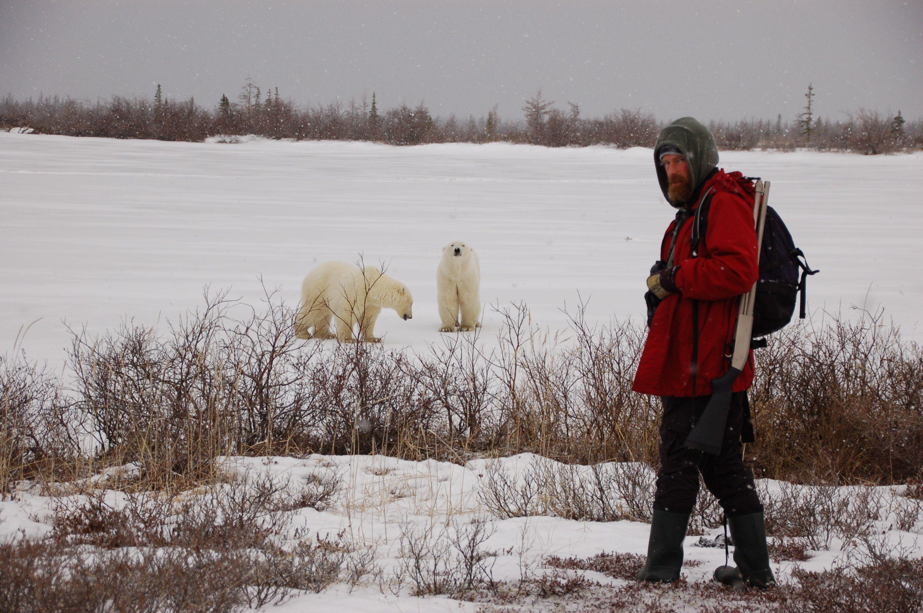 Eisbären in Manitoba09