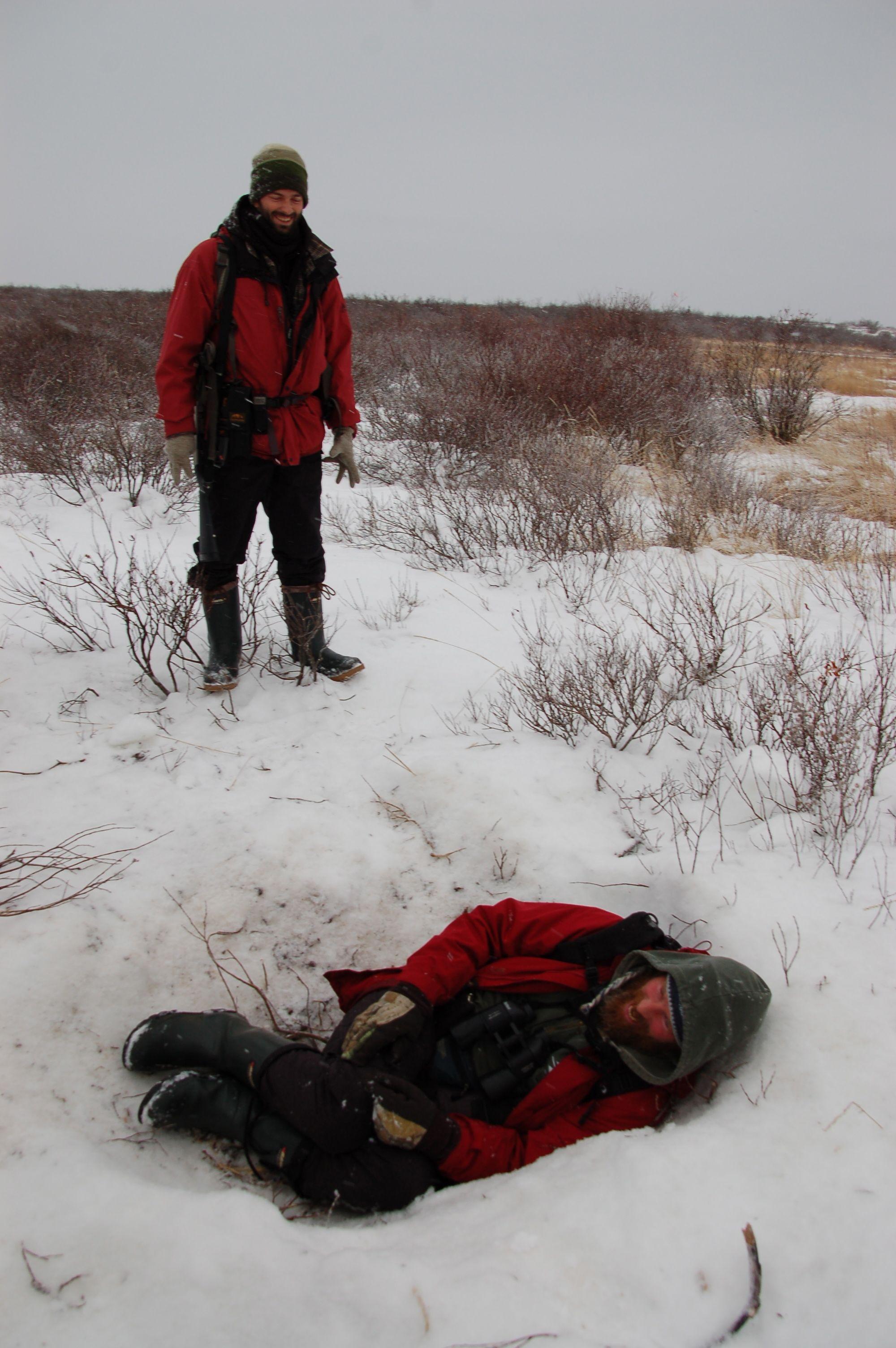 Eisbären in Manitoba11
