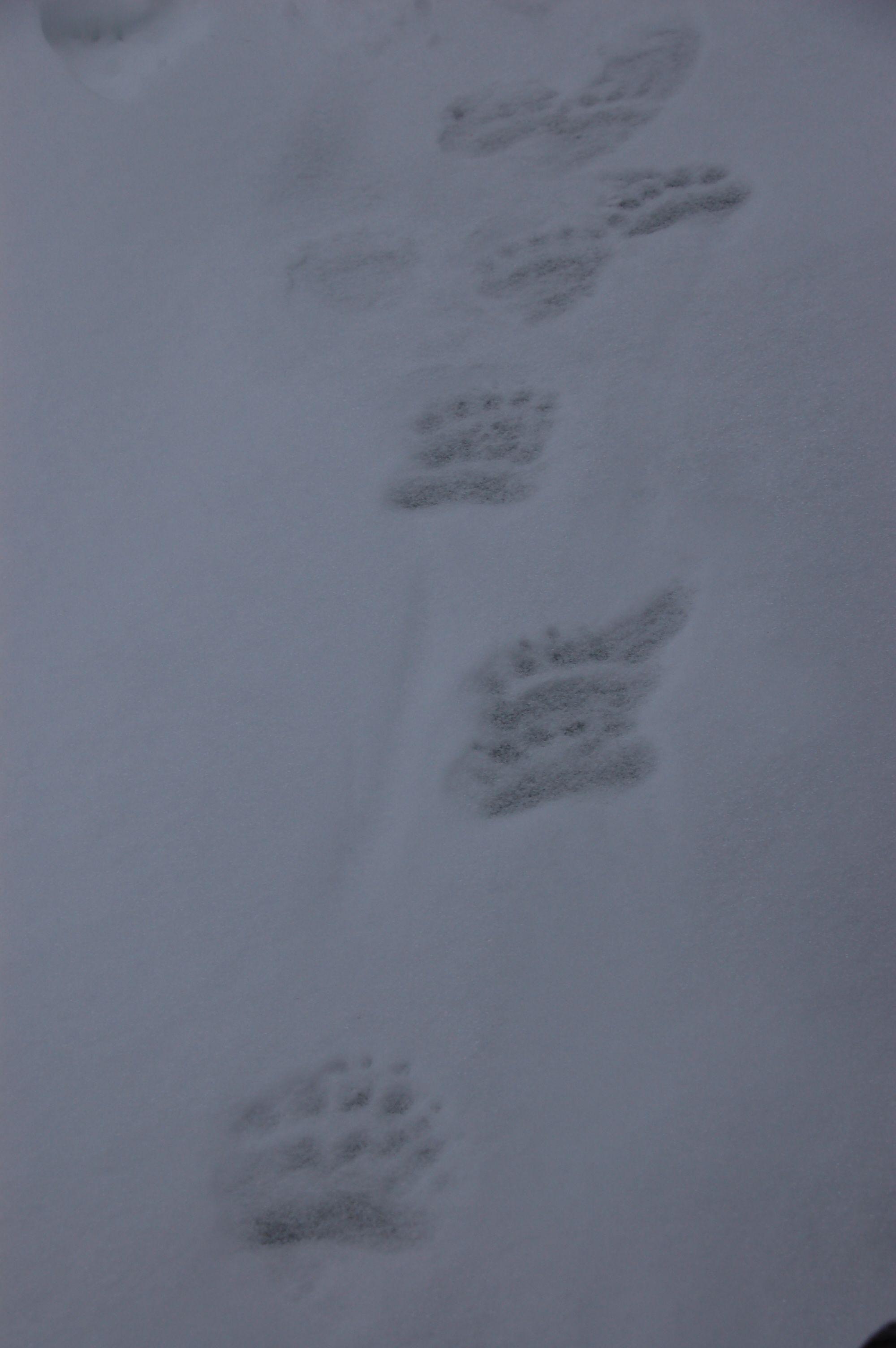 Eisbären in Manitoba15