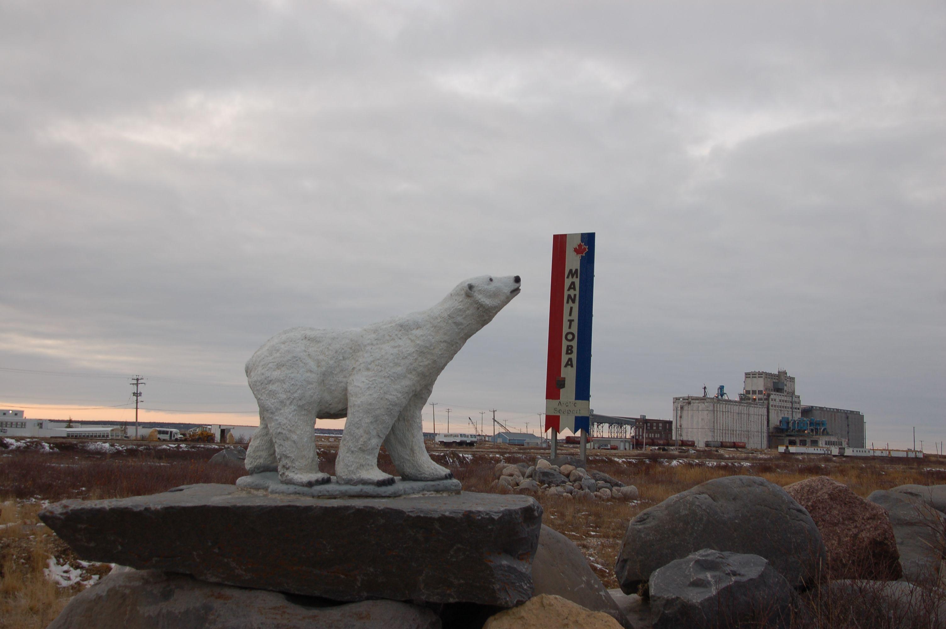 Eisbären in Manitoba20