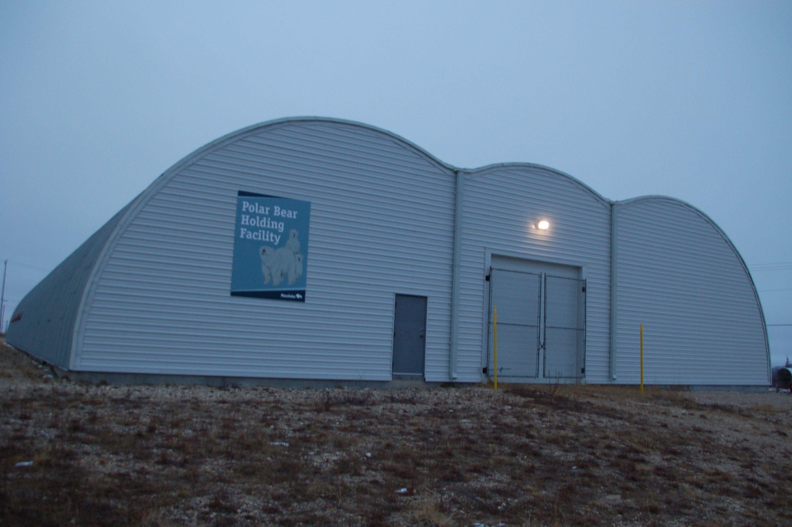 Eisbären in Manitoba26